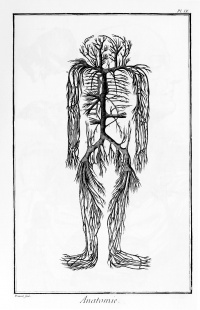 Artery system from L'Encyclopédie