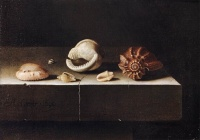 Five Shells on a Slab of Stone (1696) by Adriaen Coorte