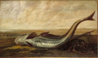 Beached Fish (1643), a painting by Frans Rijckhals
